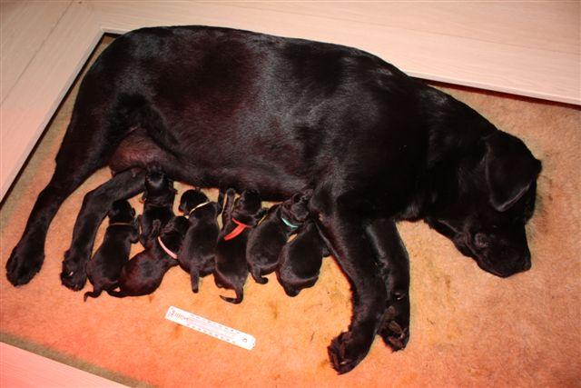 1. geboorte Jill