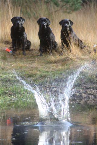 3 honden fotos 31 okt Appel 211