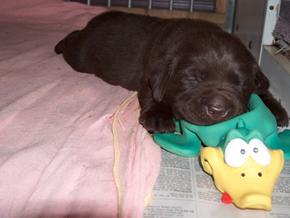 slapende_pup
